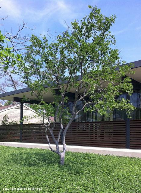 Mohle Drive Residence modern-landscape