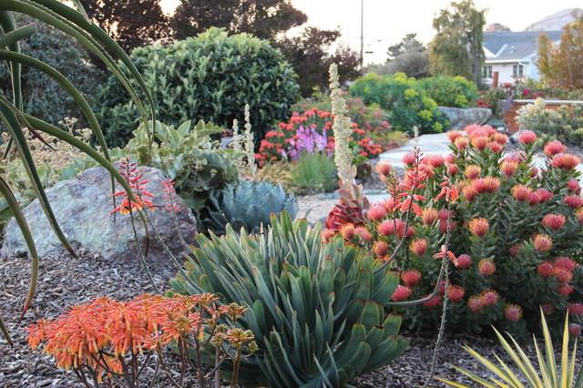 Top 10 Wind Resistant Plants Houzz