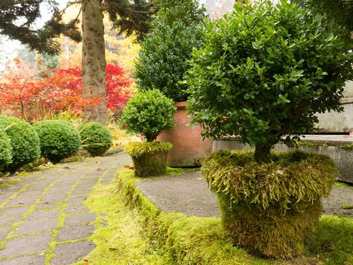 moss-elements-garden