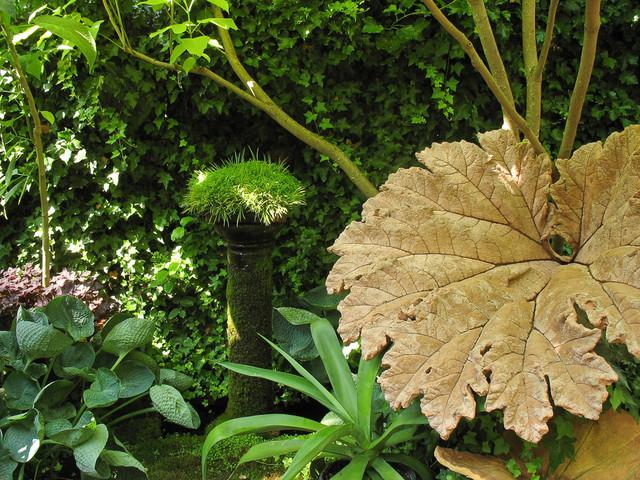 Come coltivare piante da ombra in giardino - Piante tropicali da giardino ...