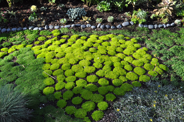 Garden Design With Moss Garden With Gardening By The Yard From Houzz.com