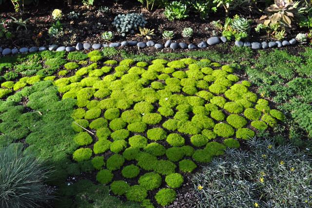 Moss Garden Contemporary Garden San Francisco By Devi