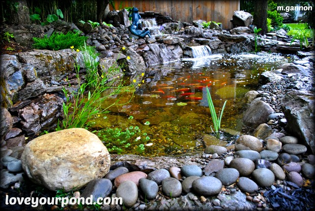 moss rock koi pond by full service aquatics project site