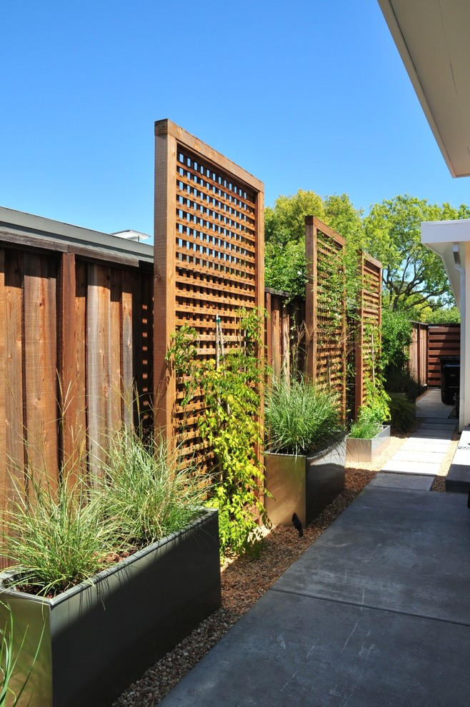 Design ideas for a contemporary side yard landscaping in San Francisco.
