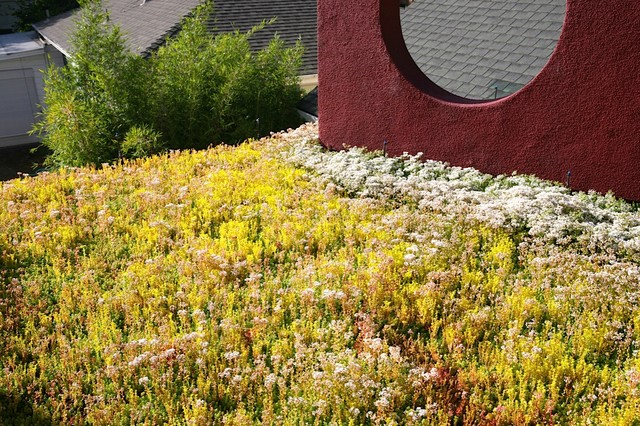 Mountain View Green Roof contemporary-landscape