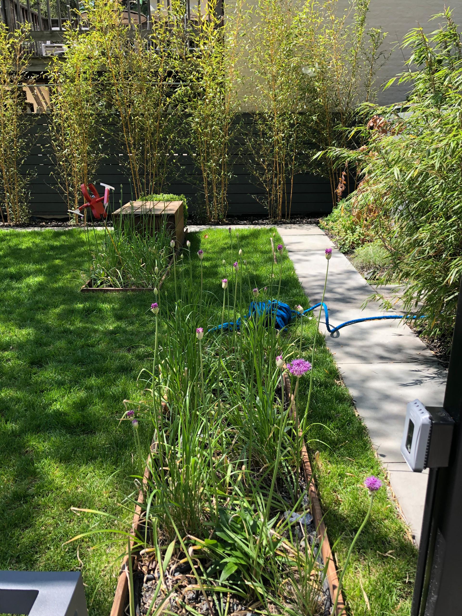 Multi-functional family backyard