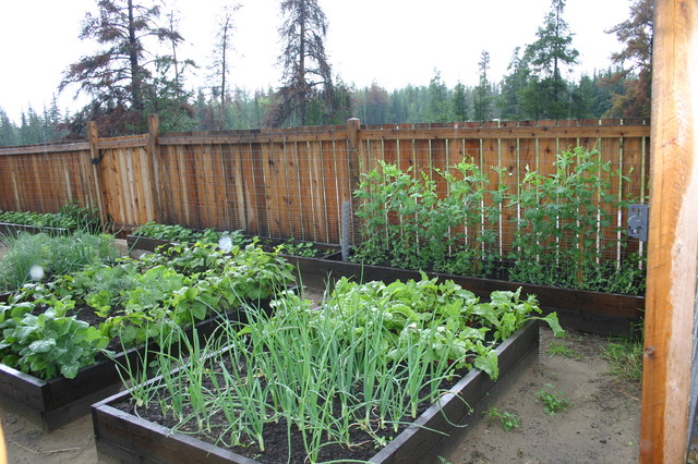 Vegetable Garden Fence Ideas Backyards