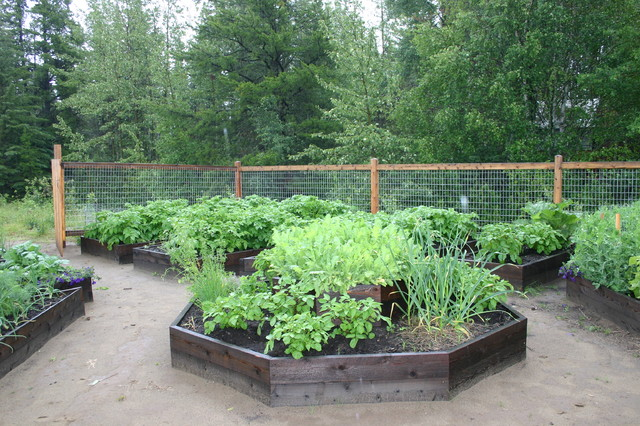 My raised beds traditional-landscape