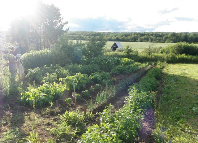 My Vegetable Garden traditional-landscape