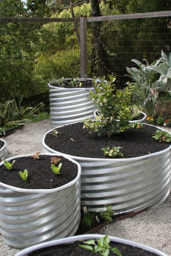 This is an example of an eclectic vegetable garden landscape in San Francisco.