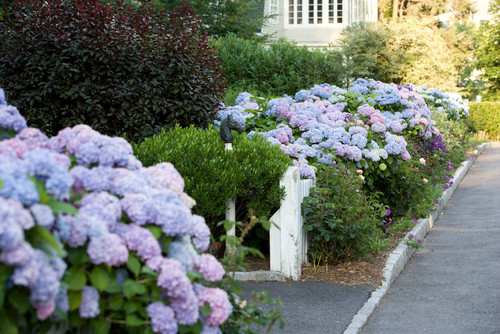 nantucket inspired new england front lawn landscape idea - Vegetable Garden Ideas New England