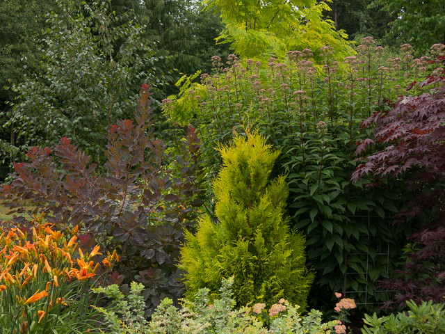 Narrow trees for narrow gardens landscape seattle by le jardinet for Columnar evergreen trees for small gardens