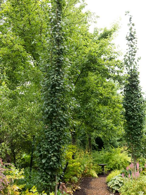 Narrow Trees For Narrow Gardens Landscape Seattle By Le Jardinet