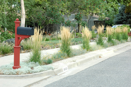 How To Landscape A Parking Strip Without Grass Install It Direct