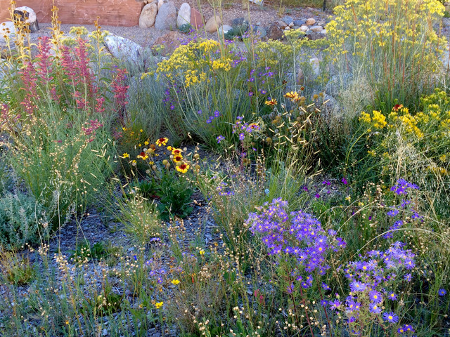 Native High Desert Meadow Brightens A Small Front Yard Eclectic