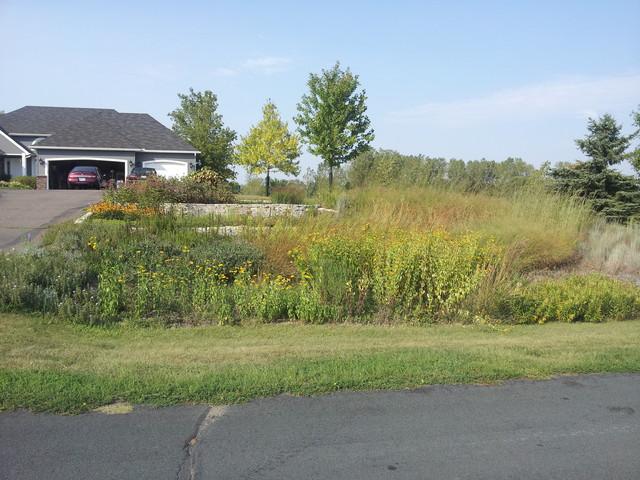 Native Prairie Garden Traditional Landscape