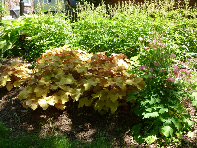 Natural garden in Ardmore,Pa traditional-landscape