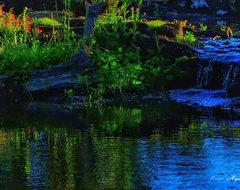 Natural Garden Pond rustic-landscape