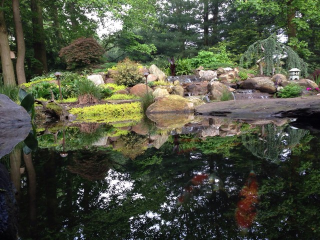 Natural koi pond with bridges that you walk across going for Natural fish pond