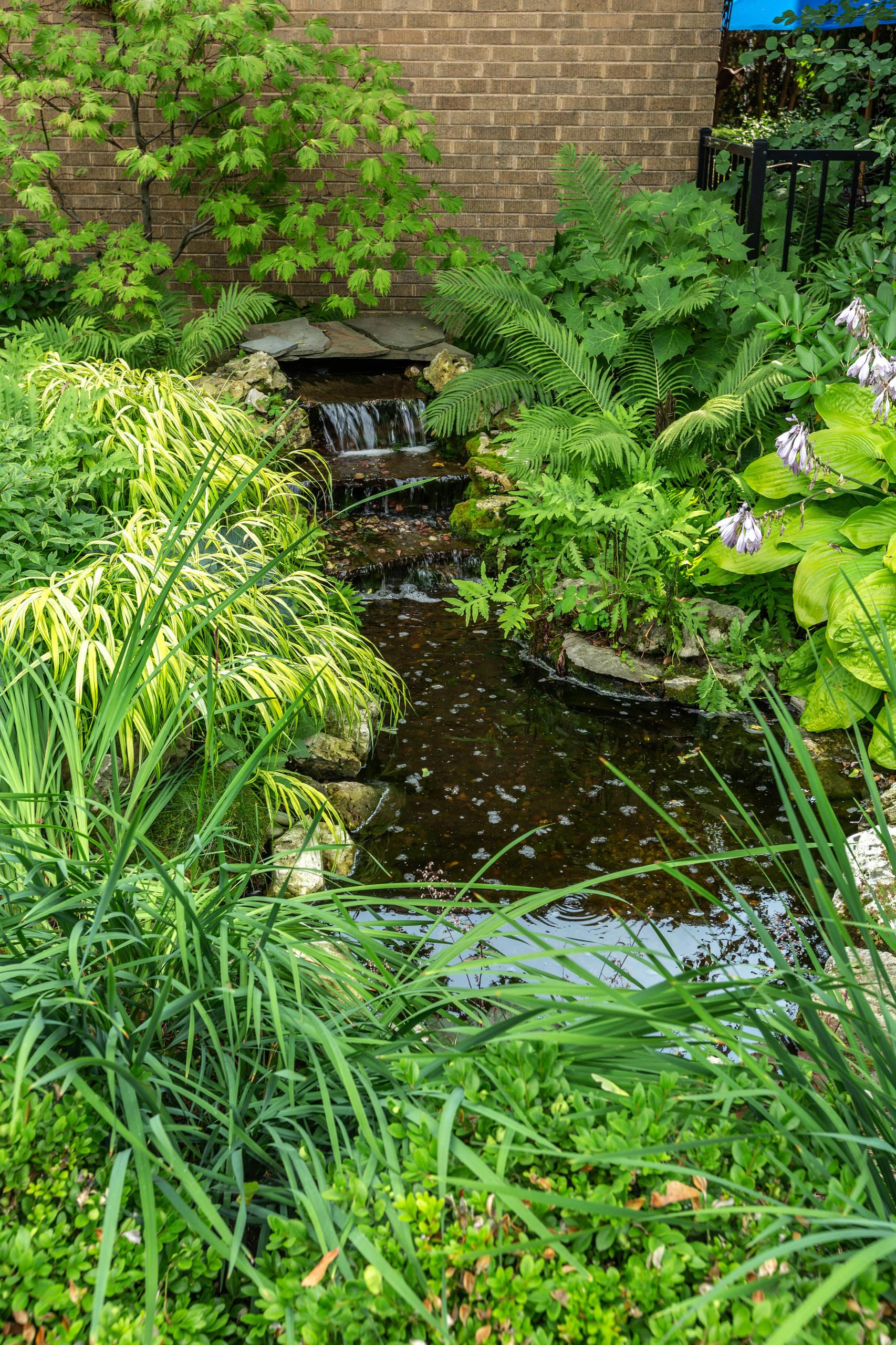 Natural Pond - Milwaukee