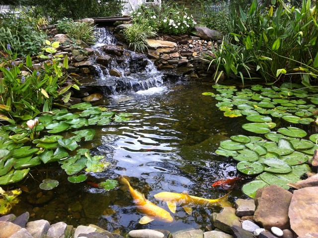 Natural pond with koi fish in loganville ga traditional for Natural fish pond