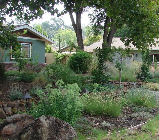 Naturalistic drought tolerant plantings Contemporary