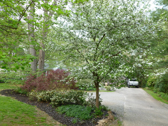 Naturalized planting to screen parking area traditional-landscape