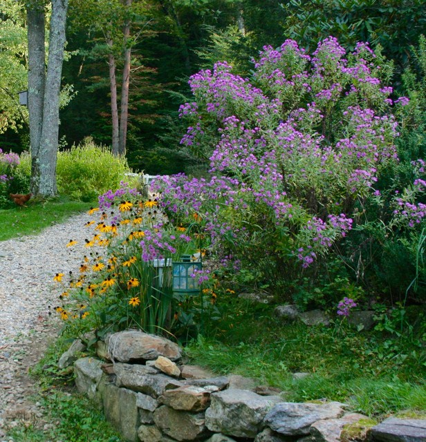 Top 10 Native Plants For The Northeast