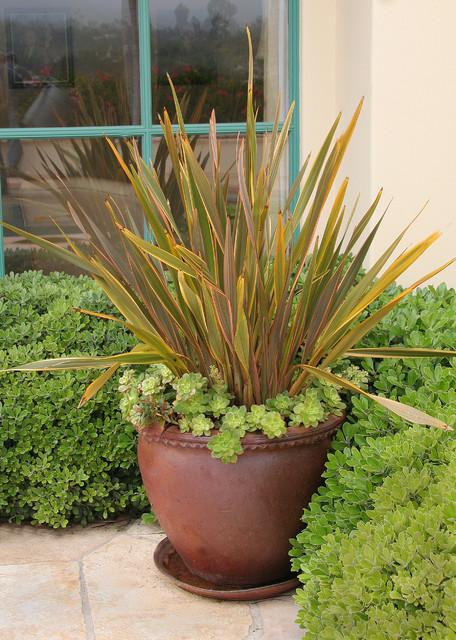 New Zealand Flax In Pot Mediterranean Landscape