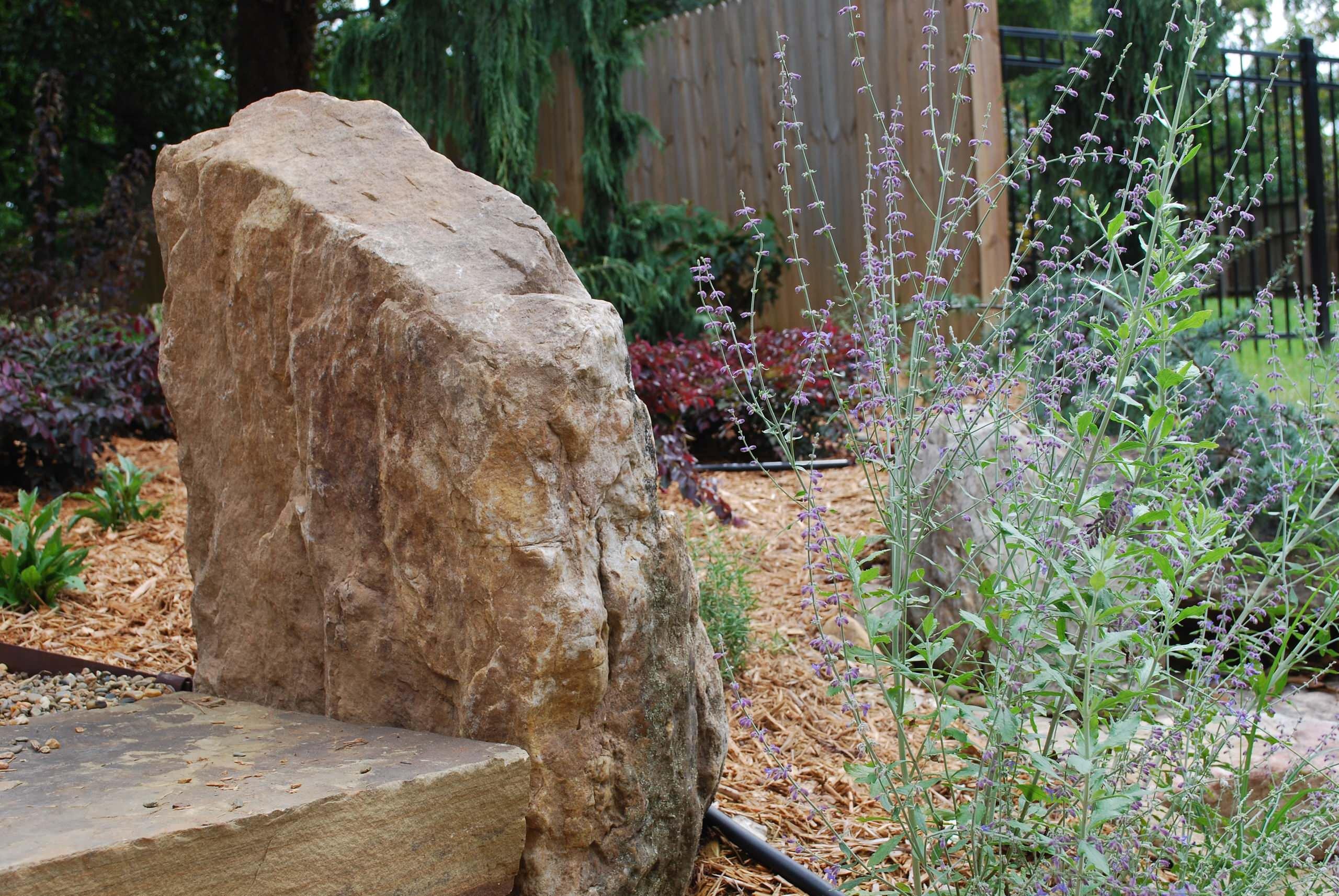 Newly designed backyard garden.