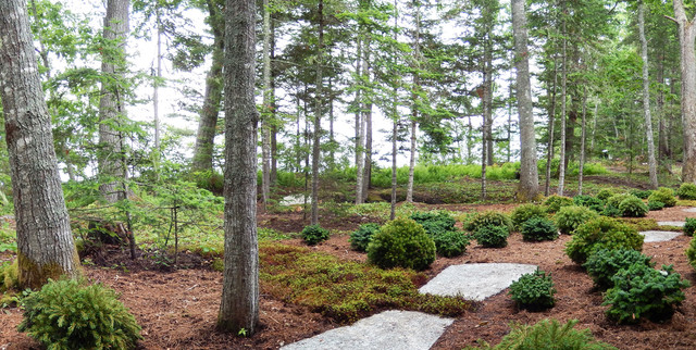 Newly planted dwarf conifers intersect planted rays of
