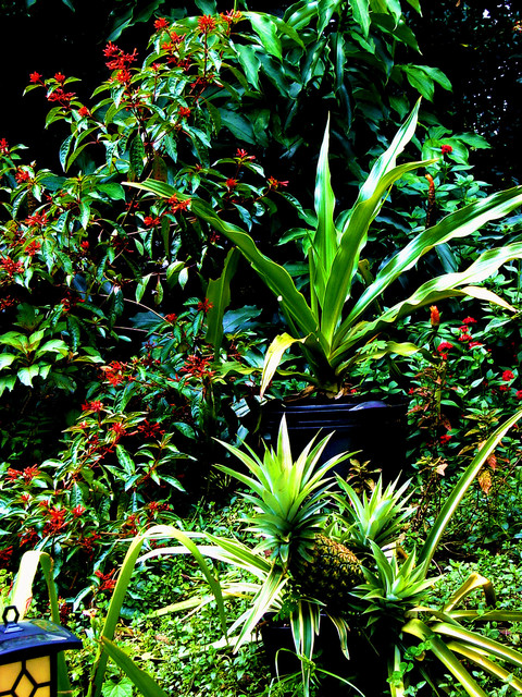 North Tampa Cottage Garden - Tropical - Landscape - tampa ...