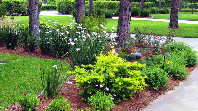 Northern inspired landscape design for tampa fl for Florida landscape design