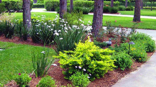 Northern Inspired Landscape Design For Tampa Fl