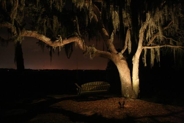 Oak tree lighting landscape charleston by moonlighting oak tree lighting landscape mozeypictures Images
