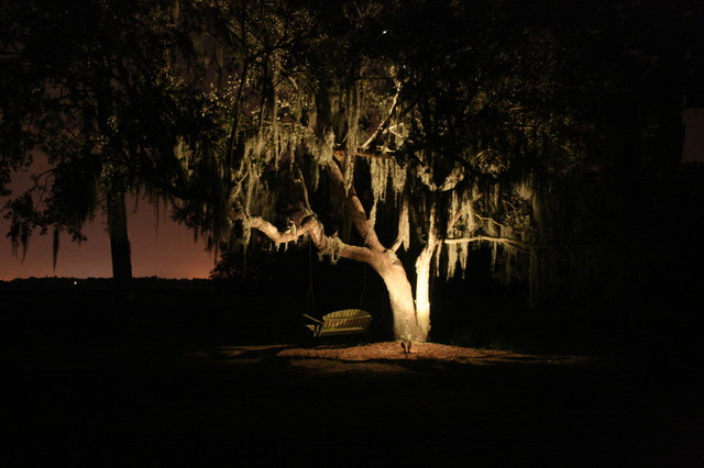 Charming Oak Tree Lighting Landscape