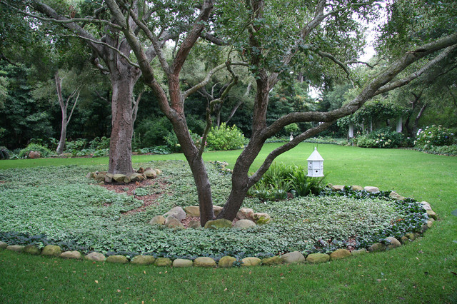 Front Yard Landscaping Under Trees : Oaks with nettle traditional landscape santa