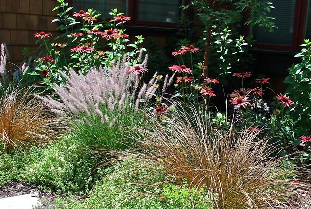 Orinda Craftsman Style Garden Traditional Landscape