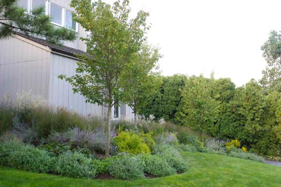 Ornamental Grasses Upstate Ny : Ornamental grass garden traditional landscape new