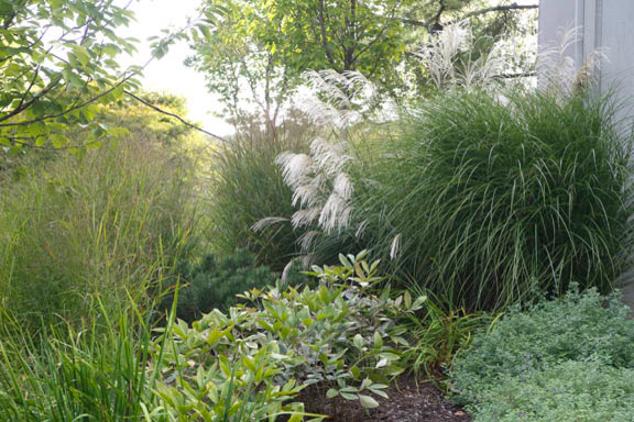 Ornamental grass garden traditional landscape new for Tall grass garden