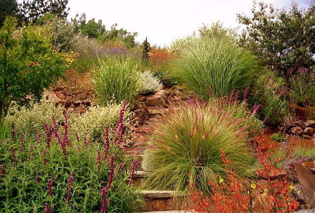 Ornamental Grasses Mediterranean Landscape san