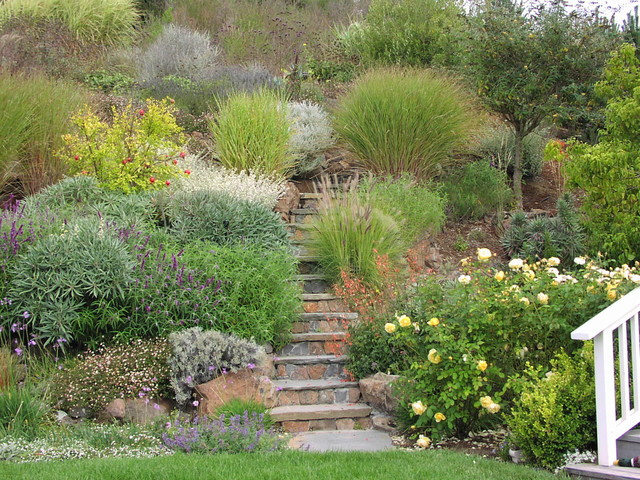 Ornamental grasses mediterranean landscape san for Ornamental grass landscape plans