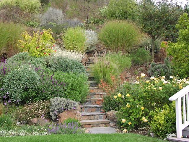 Ornamental Grasses Mediterranean Landscape San Francisco