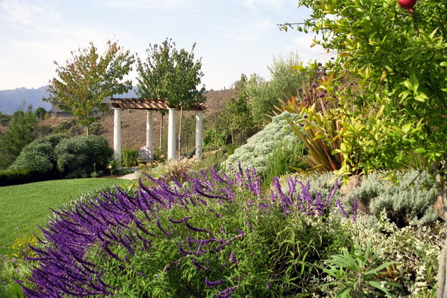 Ornamental grasses mediterranean landscape san for Landscape design using ornamental grasses