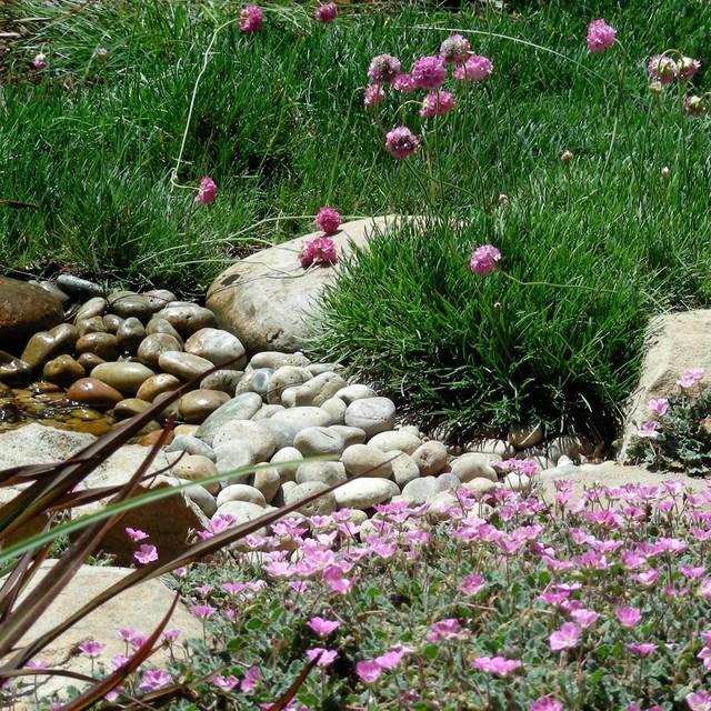 Osito Garden eclectic-landscape