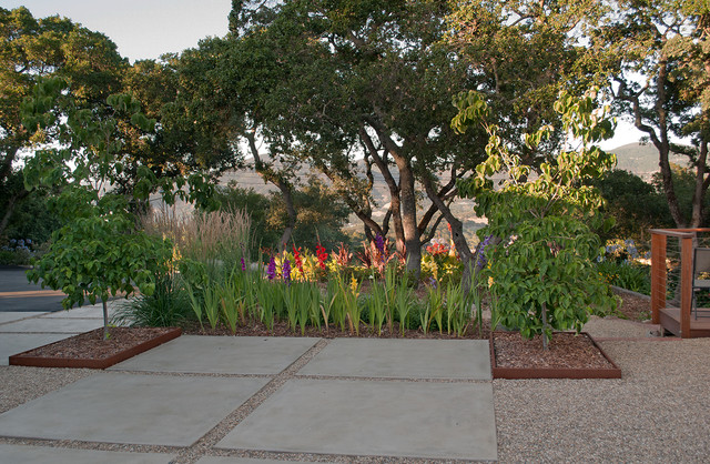 Our 1954 Mid Century Ranch Home, Napa, CA midcentury-landscape