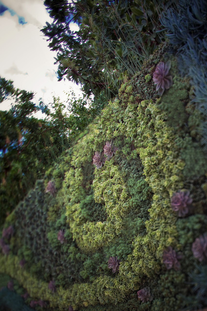 Outdoor Living Wall contemporary-landscape
