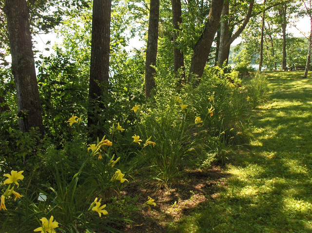 Pale Daylilies And Shade Tolerant Grasses Mark The