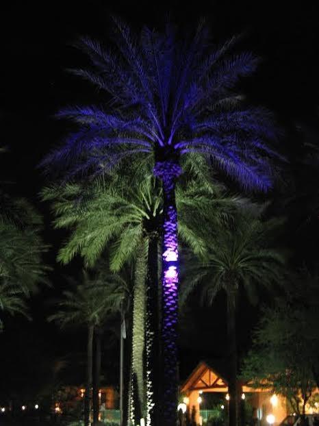 Landscape Lighting For Palm Trees : Palm tree led landscape lighting