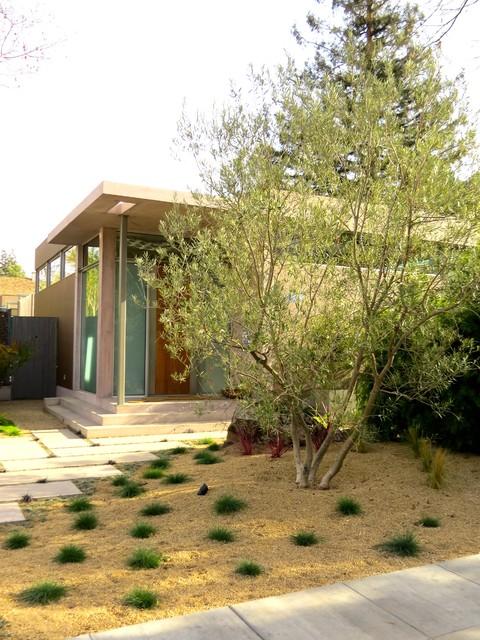 Palo Alto Warm Tropical Modern Landscape
